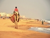 At the beach of Puri