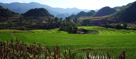 The green North of Viet Nam